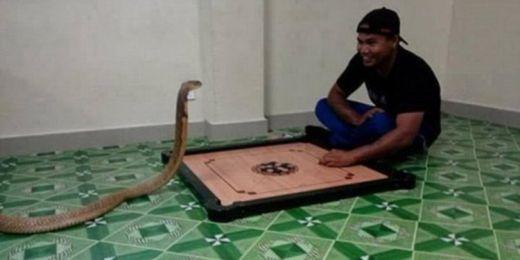 Ada-ada Saja, Pria di Thailand ini Nikahi Ular Kobra, Anggap Reinkarnasi Pacarnya yang Sudah Tiada