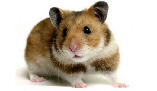 Habisi Tikus Jakarta, Hadiahnya Rp20 Ribu per Ekor