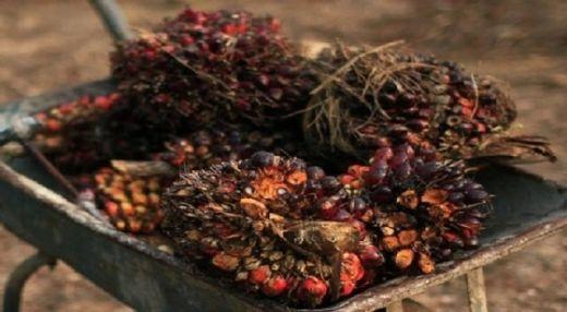 Diperlukan Konsensus Positif soal Kelapa Sawit untuk Mendukung Pembangunan Berkelanjutan