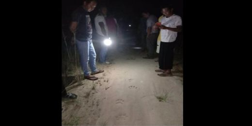 Jejak Kaki Harimau Bikin Resah, BBKSDA Riau Imbau Warga Hati-hati