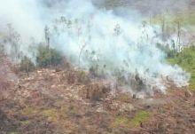 Hingga Oktober Ini, Sudah 95 Orang Jadi Tersangka Pembakar Lahan di Riau