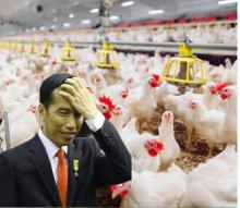 Indonesia Kalah Sidang Gugatan di WTO, Pemerintah Diminta Antisipasi Banjirnya Impor Ayam dari Brasil