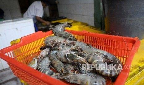 Sikapi Kabar Adanya Penjualan Udang Palsu Berbahan Plastik, Distan Bogor Sidak Supermarket