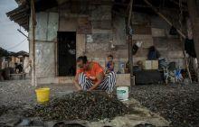Era Jokowi, Pakar Kebijakan Publik: Maluku dan Papua Tetap Miskin