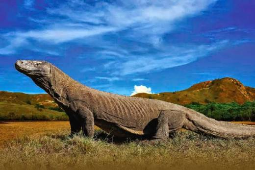 Fam Tripers Thailand Terkagum Habis Cerita Dinosaurus Asli Indonesia