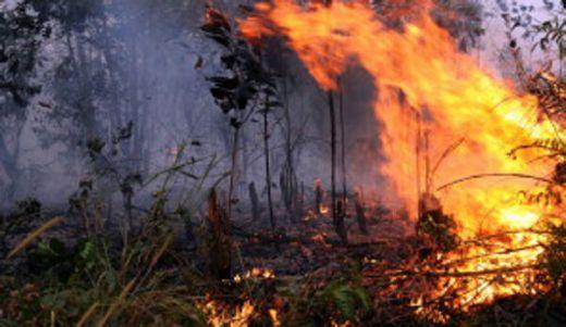 Kementerian LHK Gugat Perusahaan Pembakar Lahan Rp 1,2 Triliun