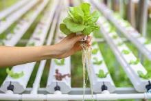Komisi Pangan Dorong Pertanian Rumahan di Tengah Pandemi
