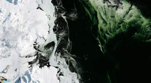 Lapisan Es di Antartika Berubah Jadi Hijau, Ada Apa?