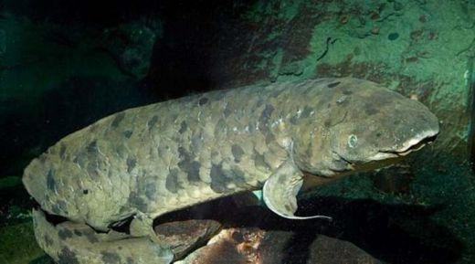 Ikan Tertua di Dunia Akhirnya Menghembuskan Napas Terakhir di Usia 90 Tahun