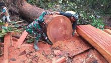 Tak Jera, Pelaku Illegal Logging Masih Beroperasi di Taman Nasional Tesso Nilo Riau
