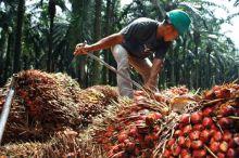 Pemerintah Diingatkan Agar Tak Terlena Andalkan Ekspor Kelapa Sawit