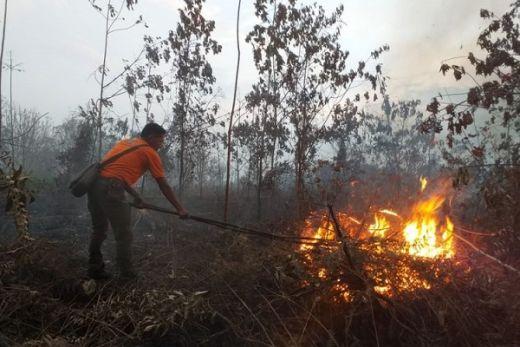 110 Hektare Lahan Gambut di Ibu Kota Baru Hangus dalam Sepekan