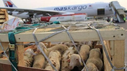 Potensinya Cukup Besar, Pemerintah harus Permudah Ekspor Domba ke Timur Tengah dan Asia