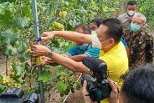 Bamsoet Resmikan Jogja Anggur Agrowisata Unggulan Bantul