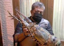 Fahri Hamzah soal Benih Lobster: Saya Rela Jadi Tersangka KPK Jika Bukti Valid
