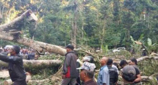 Gara-gara Pohon Tumbang, Enam Orang Luka, Lalin Banyuwangi - Surabaya Macet Total