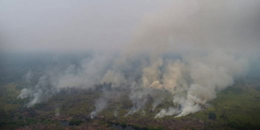 Pura-pura Panik Lihat Kobaran Api, 8 Orang Pembakar Lahan di Berau, Kaltim Ditangkap