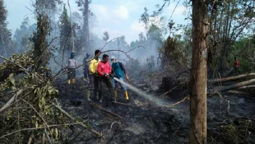 Lahan Percontohan BRG di Kepulauan Meranti Tak Tersentuh Api