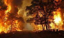 Titik Api Mulai Bermunculan, BRG Perbanyak Posko dan Infrastruktur Pembasahan