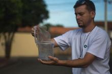Sempat Ditolak 240 Ribuan Orang, Nyamuk Jantan Rekayasa Genetik akan Dilepas pada 2021