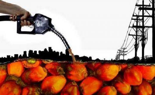 Soal Subsidi 11 Industri Biodiesel, IDM: Piye Iki Pak Jokowi, Pemerintah Kok Bisa Dibohongi Perusahaan Sawit?